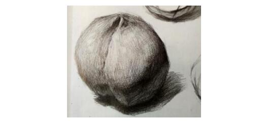 静物素描的水果基本画法